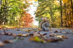 A squirrel in the road